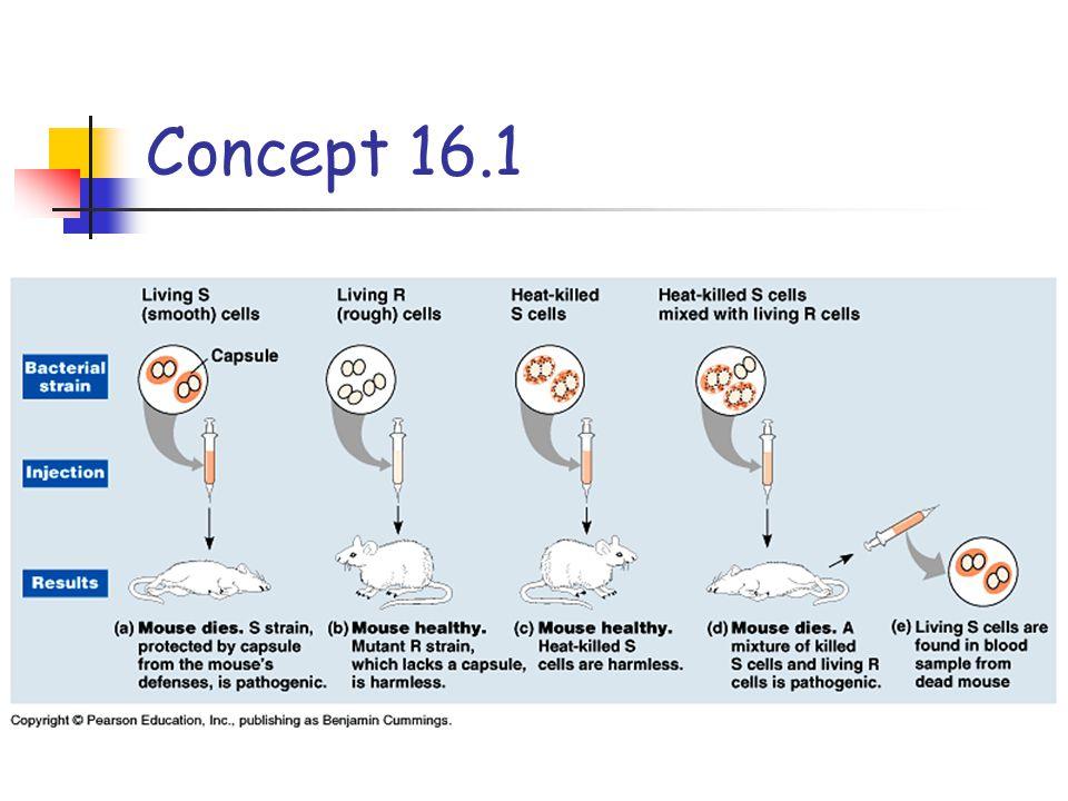 Concept 16.1