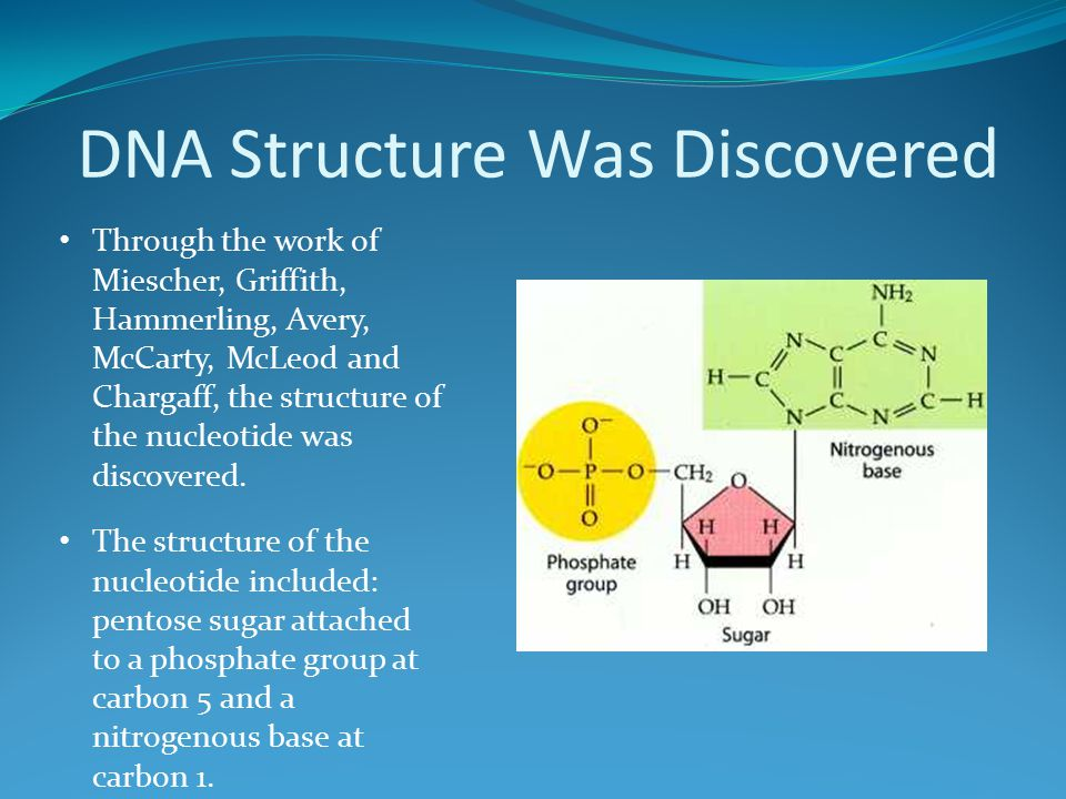 DNA Structure Was Discovered