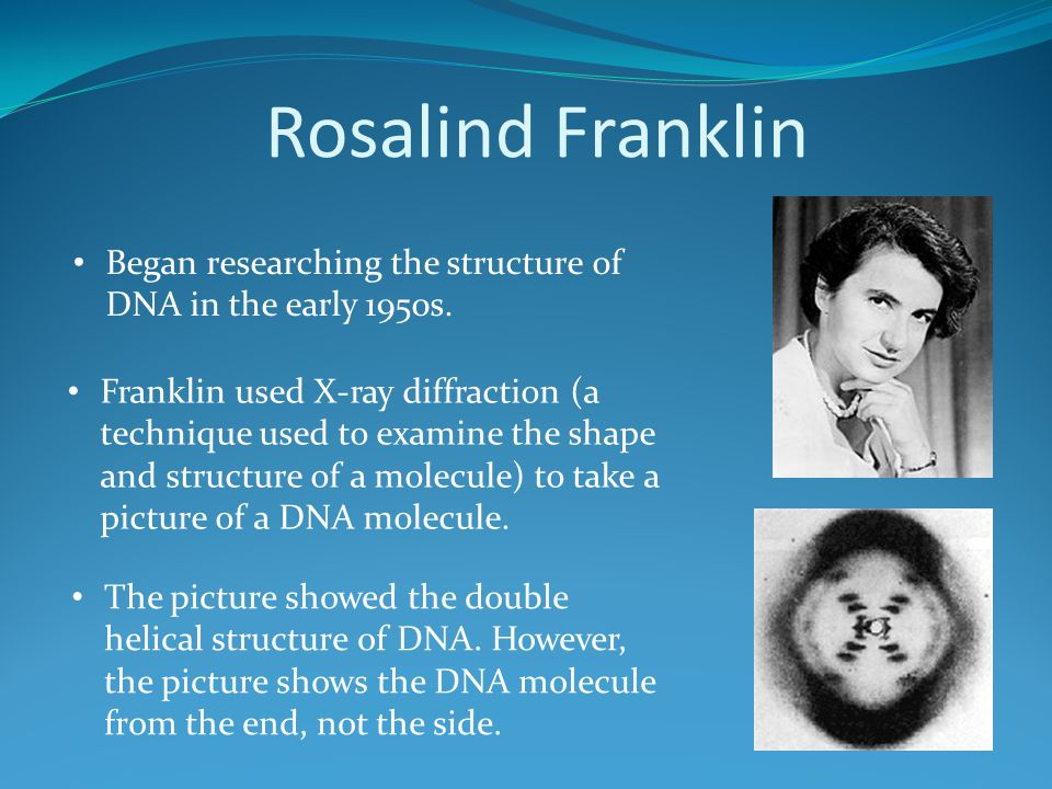 Rosalind Franklin Began researching the structure of DNA in the early 1950s.