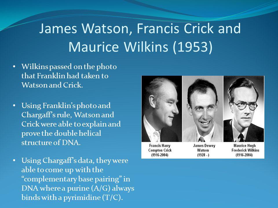 James Watson, Francis Crick and Maurice Wilkins (1953)