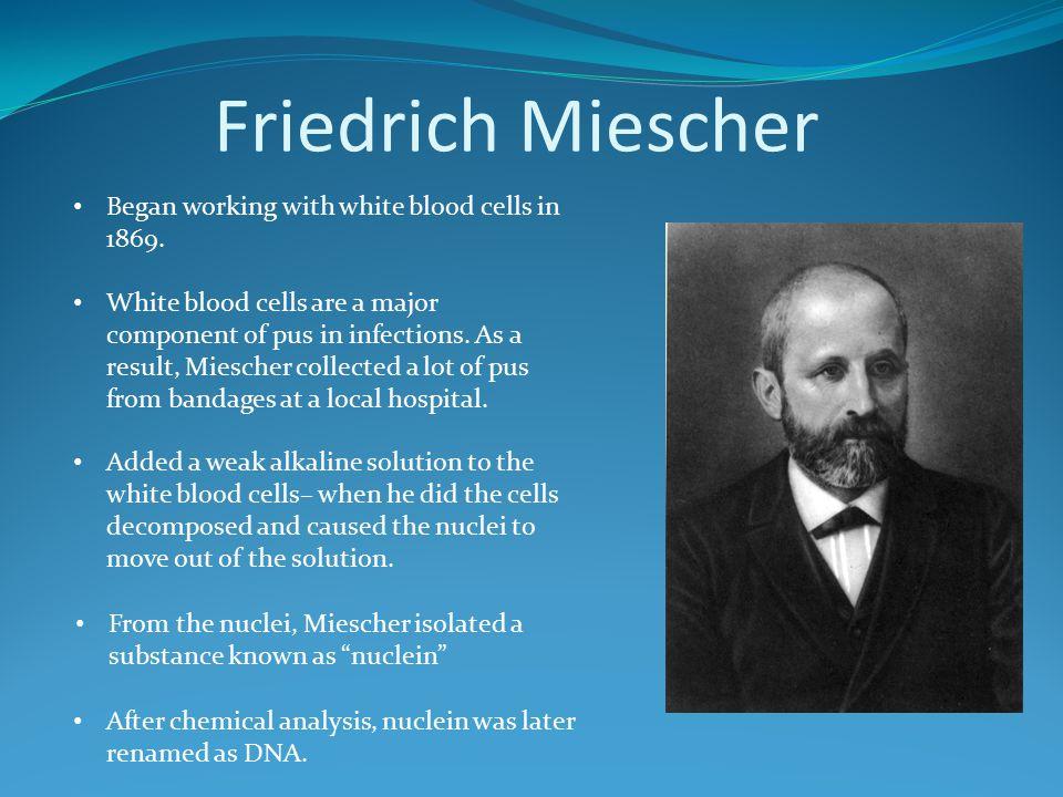 Friedrich Miescher Began working with white blood cells in 1869.