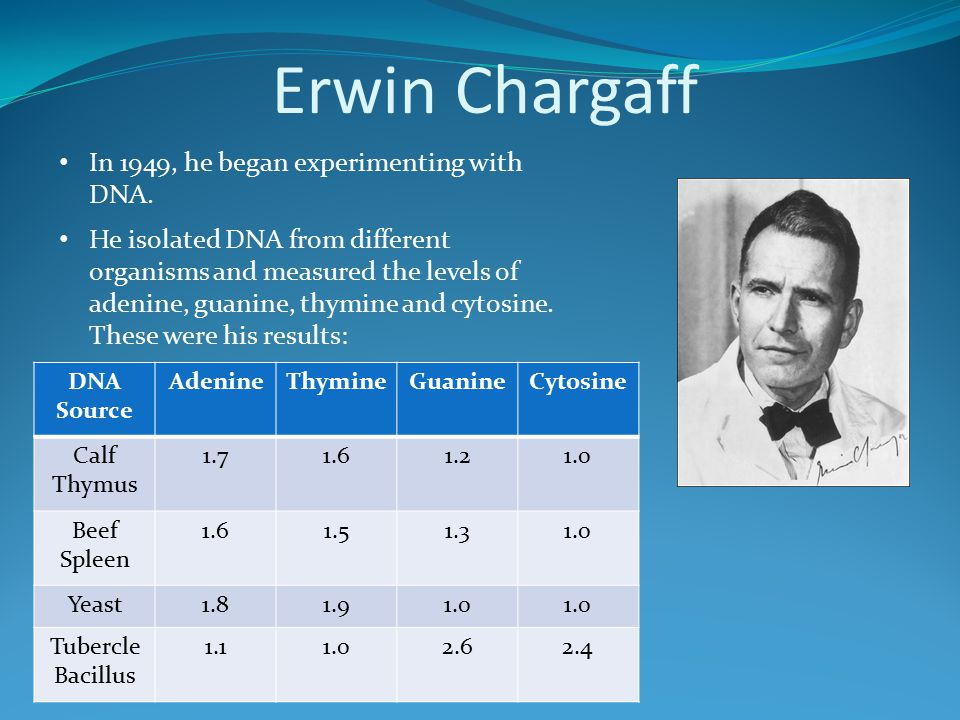 Erwin Chargaff In 1949, he began experimenting with DNA.
