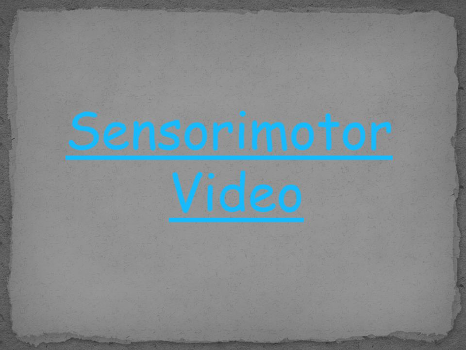 Sensorimotor Video