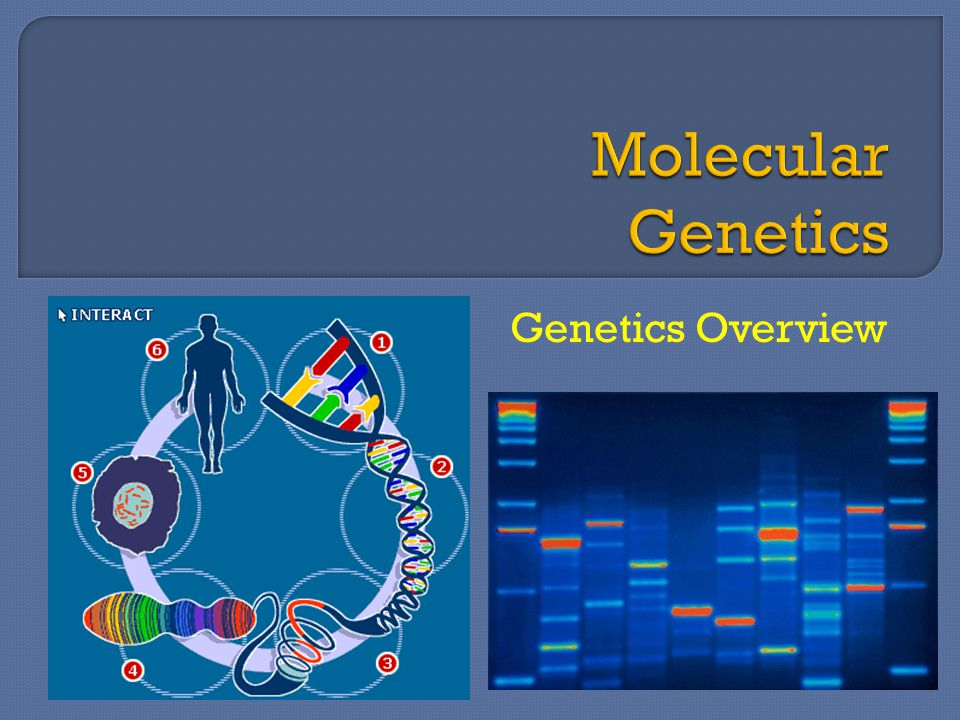 Molecular Genetics Genetics Overview
