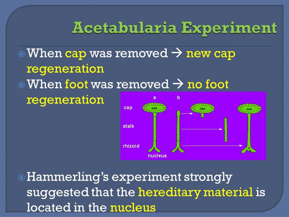Acetabularia Experiment