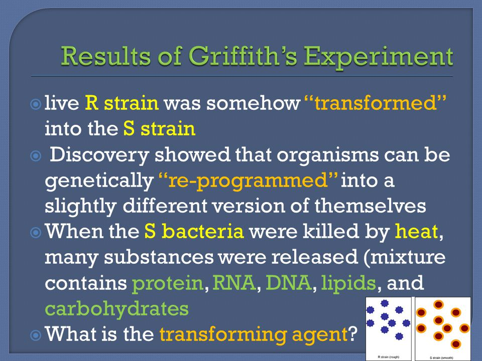 Results of Griffith's Experiment