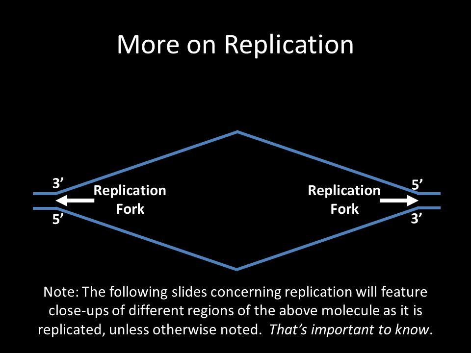 More on Replication 3' 5' Replication Fork Replication Fork 5' 3'