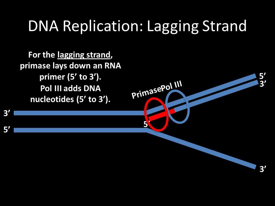 DNA Replication: Lagging Strand