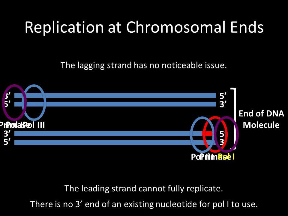 Replication at Chromosomal Ends