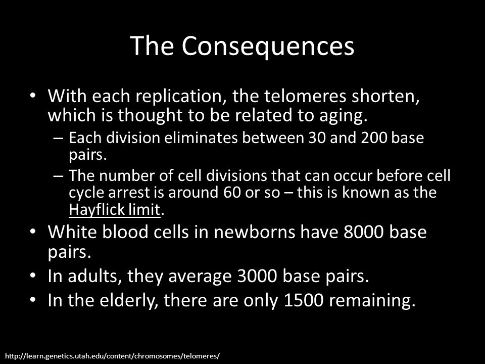 The Consequences With each replication, the telomeres shorten, which is thought to be related to aging.