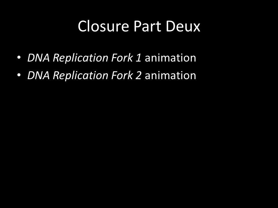 Closure Part Deux DNA Replication Fork 1 animation