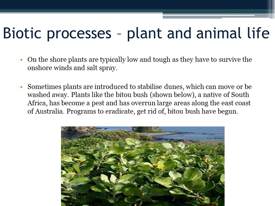 Biotic processes – plant and animal life