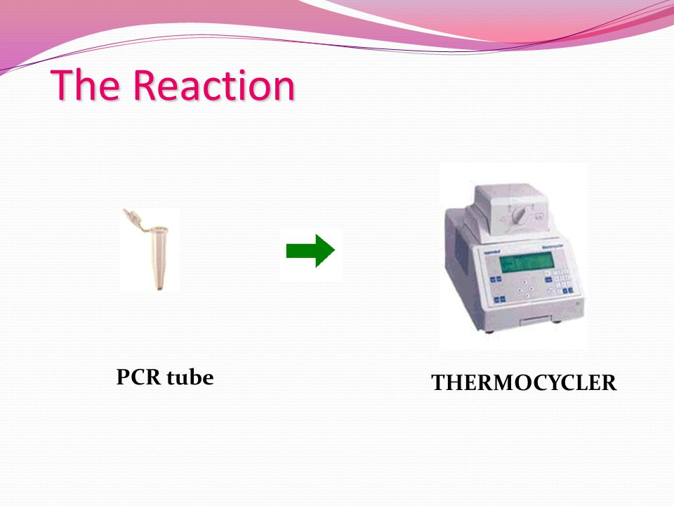 The Reaction PCR tube THERMOCYCLER