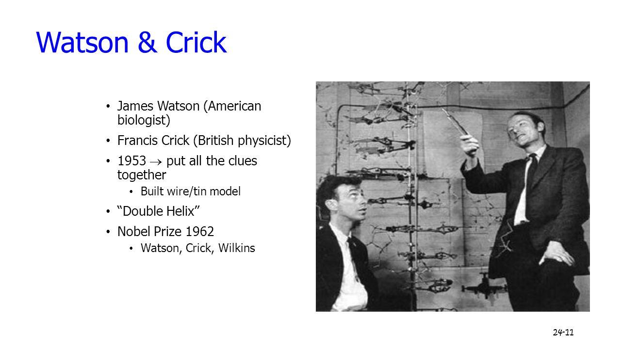 Watson & Crick James Watson (American biologist)