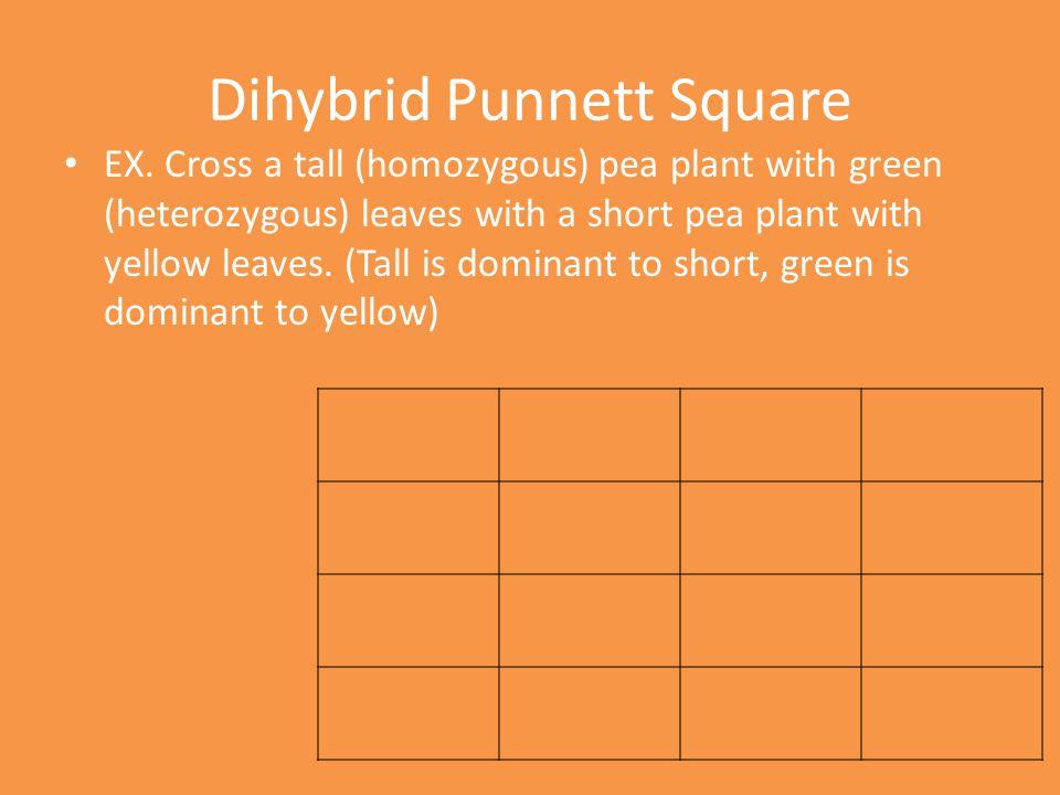 Dihybrid Punnett Square