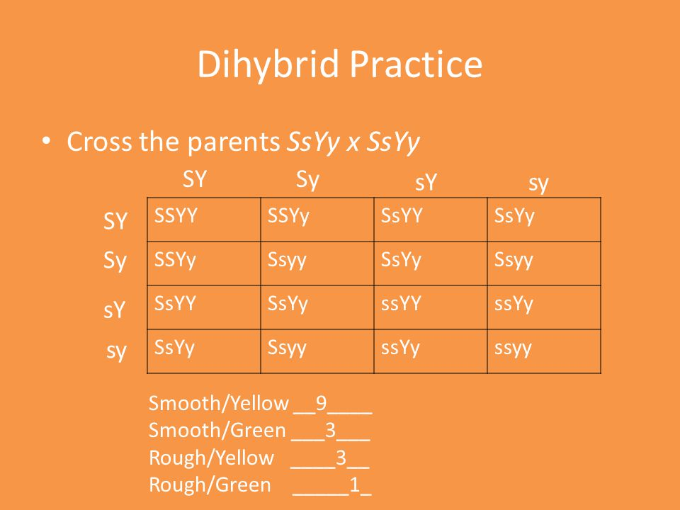 Dihybrid Practice Cross the parents SsYy x SsYy SY Sy sY sy SY Sy sY