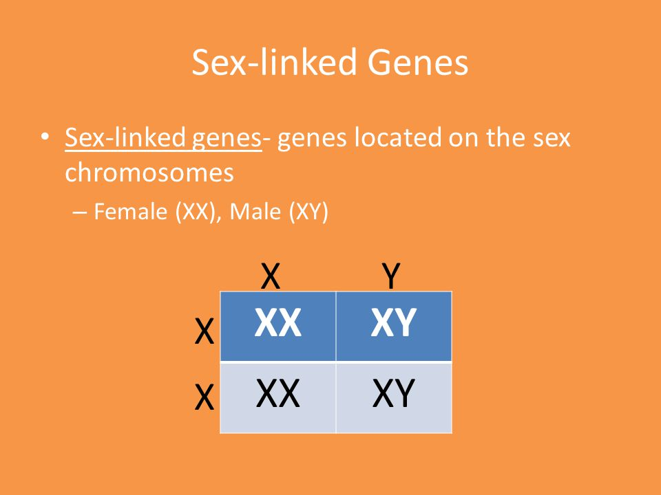 XX XY Sex-linked Genes X Y X X