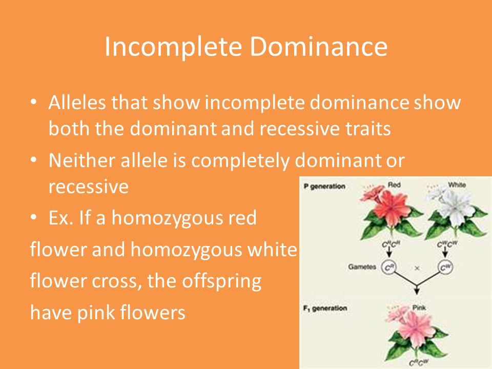 Incomplete Dominance Alleles that show incomplete dominance show both the dominant and recessive traits.