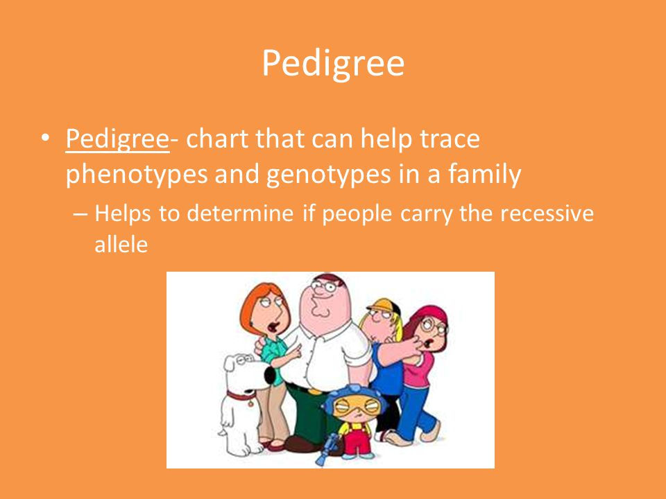 Pedigree Pedigree- chart that can help trace phenotypes and genotypes in a family.