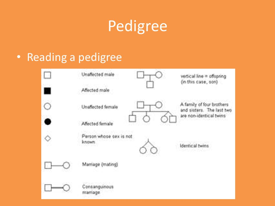 Pedigree Reading a pedigree