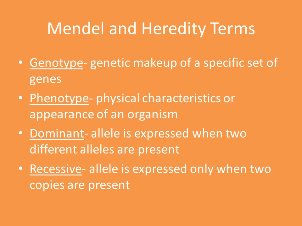 Mendel and Heredity Terms