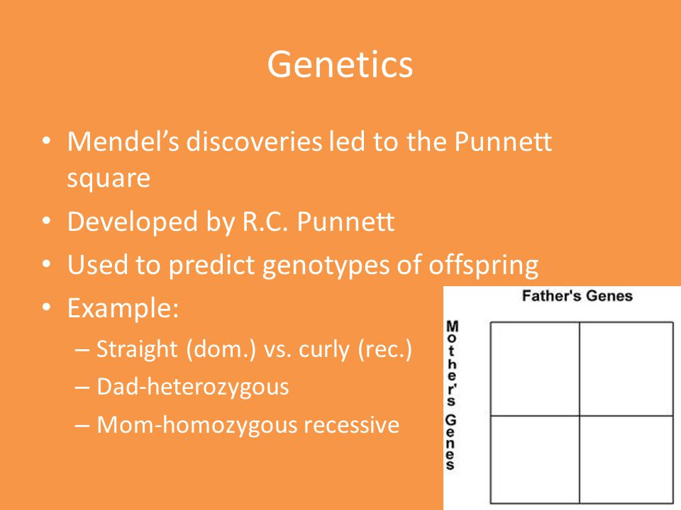 Genetics Mendel's discoveries led to the Punnett square