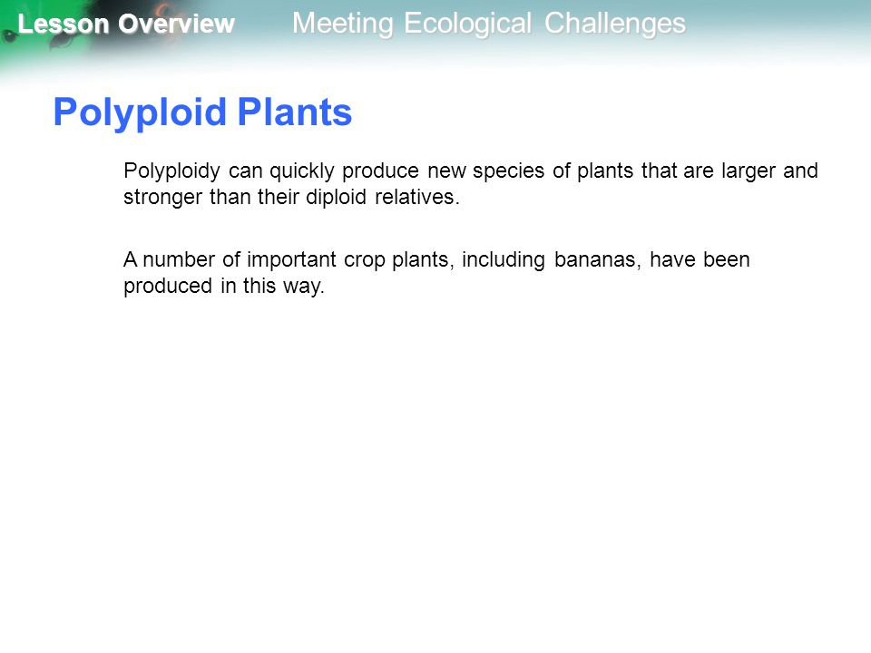 Polyploid Plants Polyploidy can quickly produce new species of plants that are larger and stronger than their diploid relatives.
