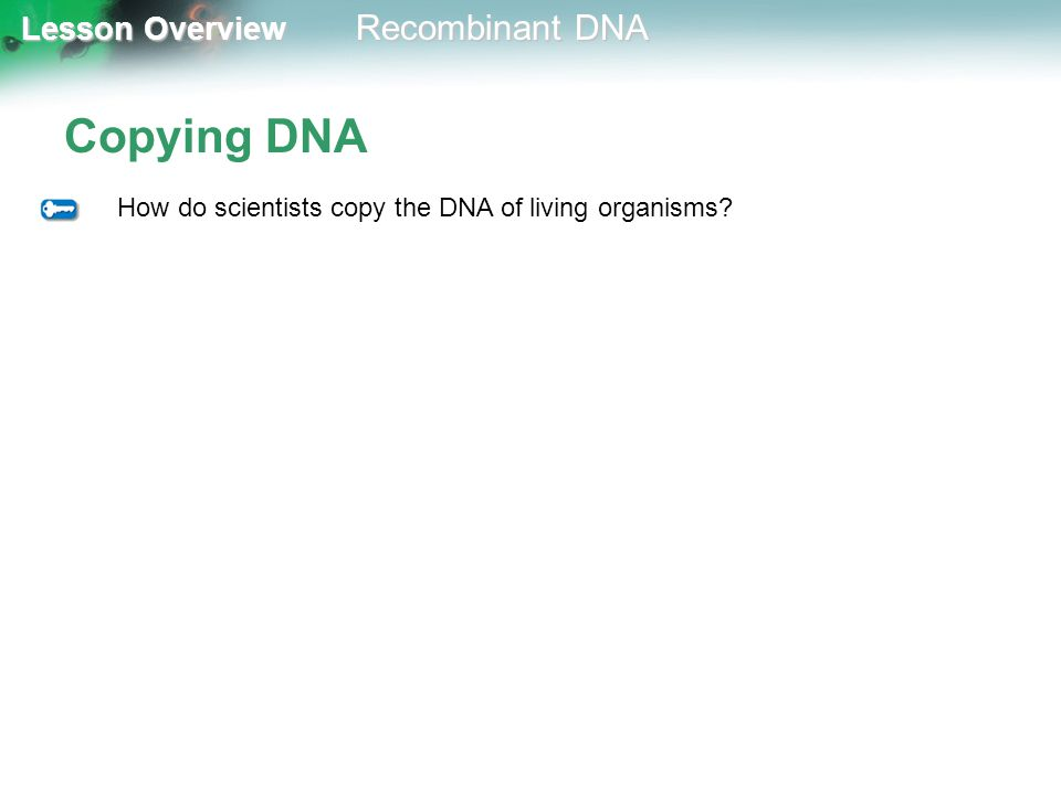 Copying DNA How do scientists copy the DNA of living organisms