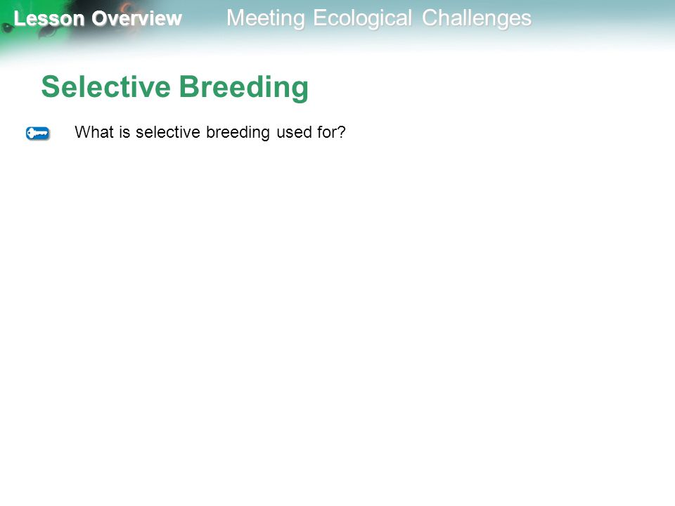 Selective Breeding What is selective breeding used for