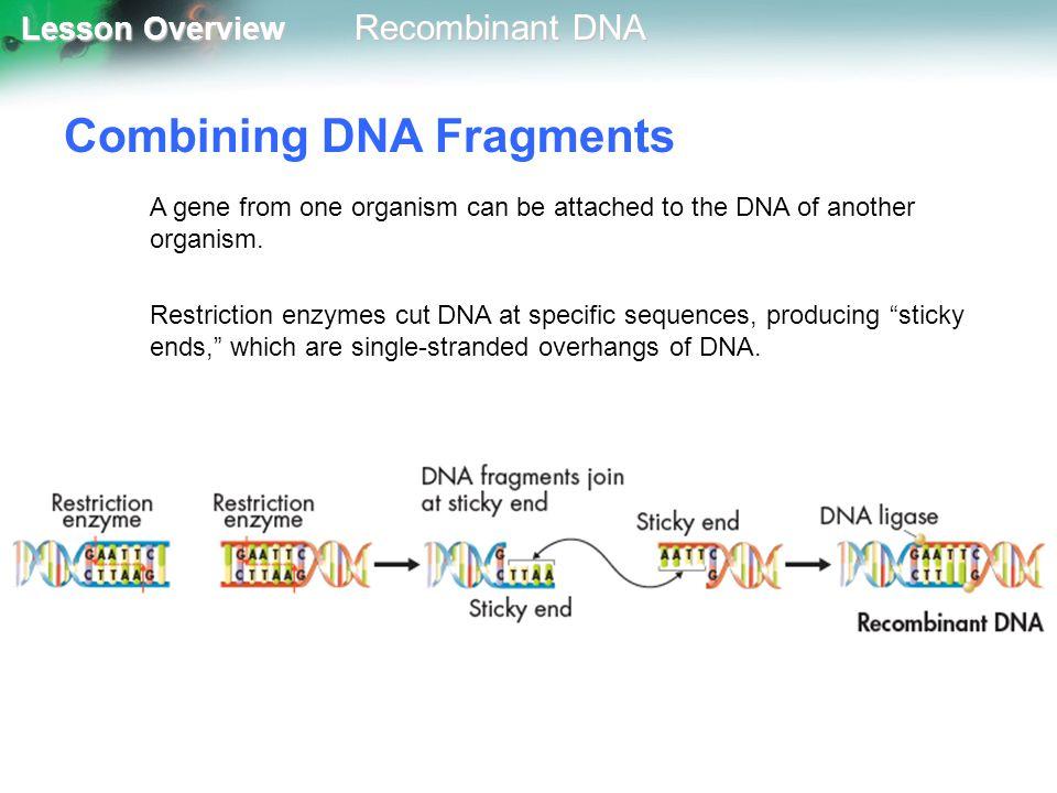 Combining DNA Fragments