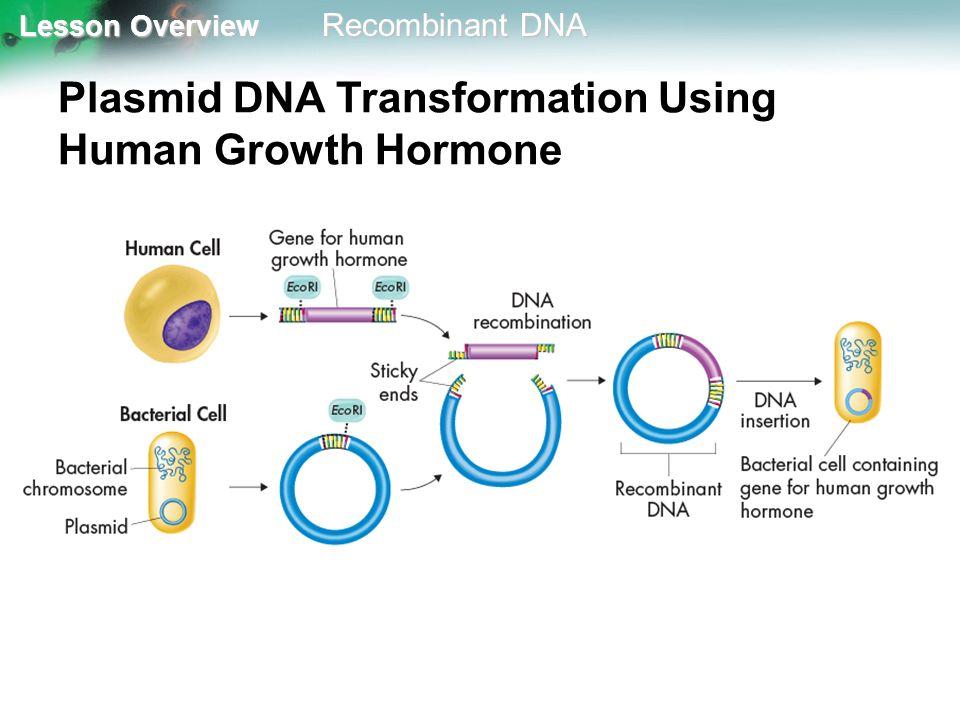 Plasmid DNA Transformation Using Human Growth Hormone