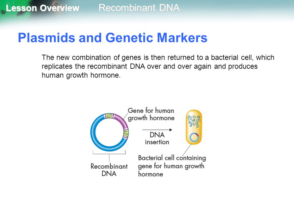Plasmids and Genetic Markers