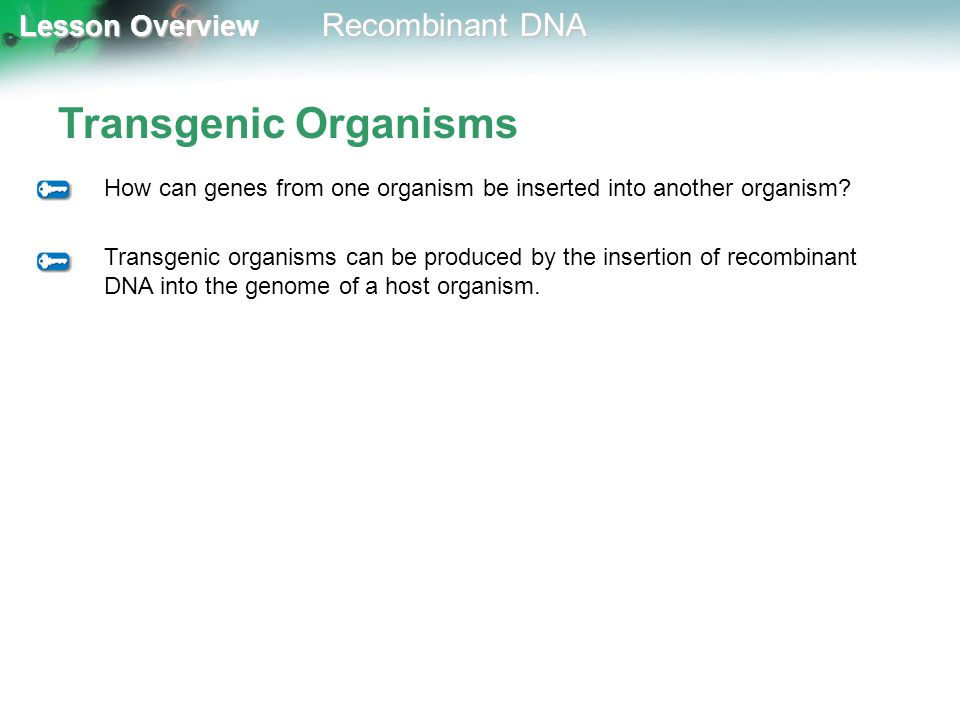 Transgenic Organisms How can genes from one organism be inserted into another organism