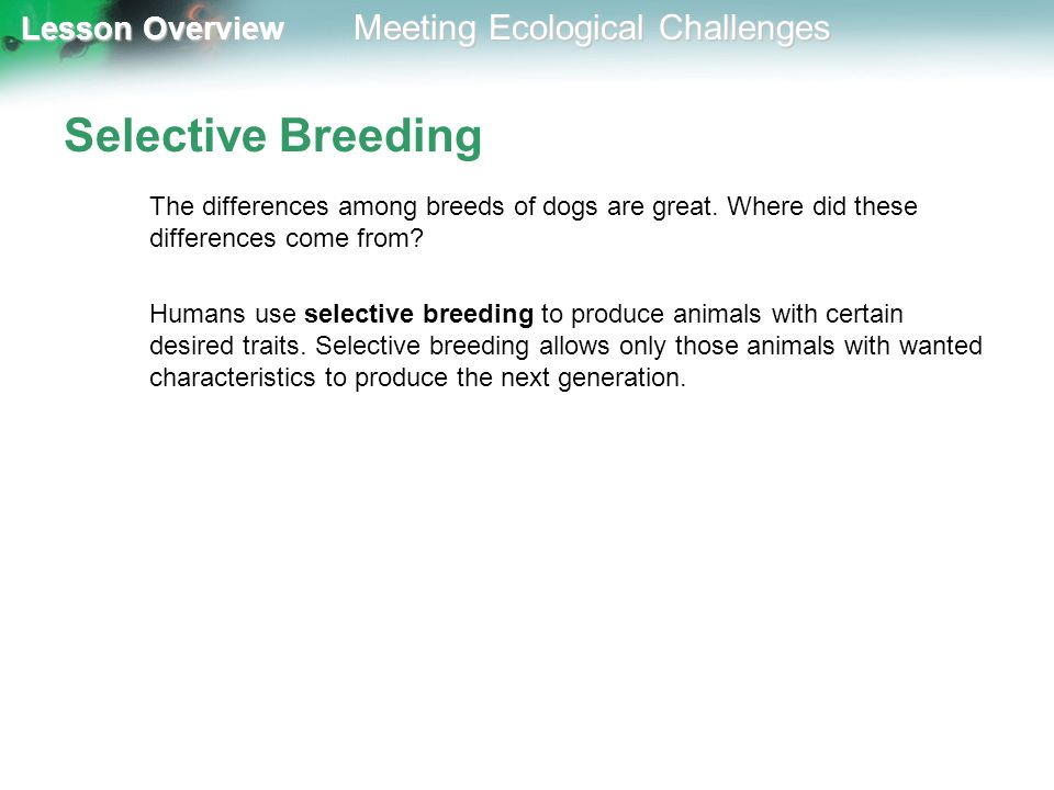 Selective Breeding The differences among breeds of dogs are great. Where did these differences come from