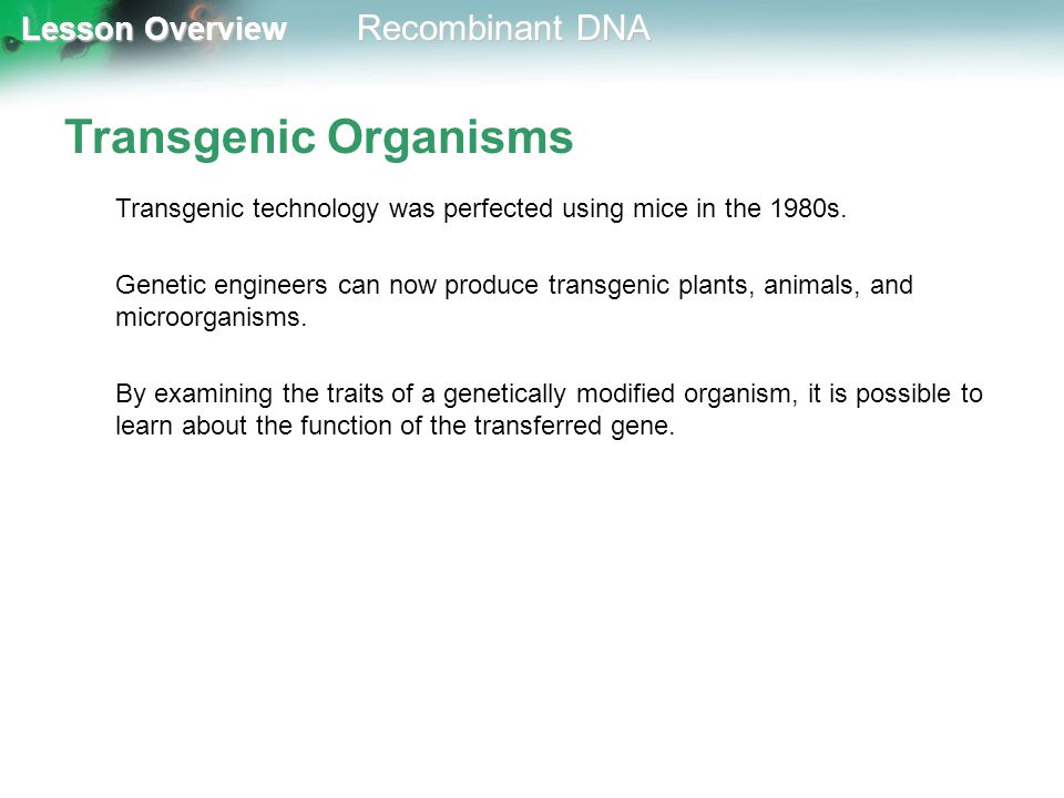 Transgenic Organisms Transgenic technology was perfected using mice in the 1980s.