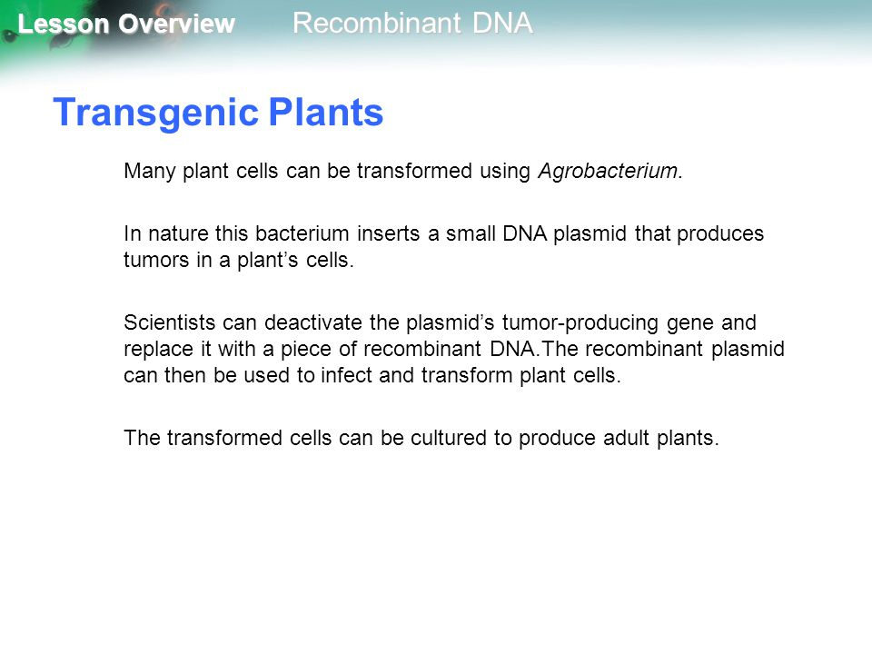 Transgenic Plants Many plant cells can be transformed using Agrobacterium.