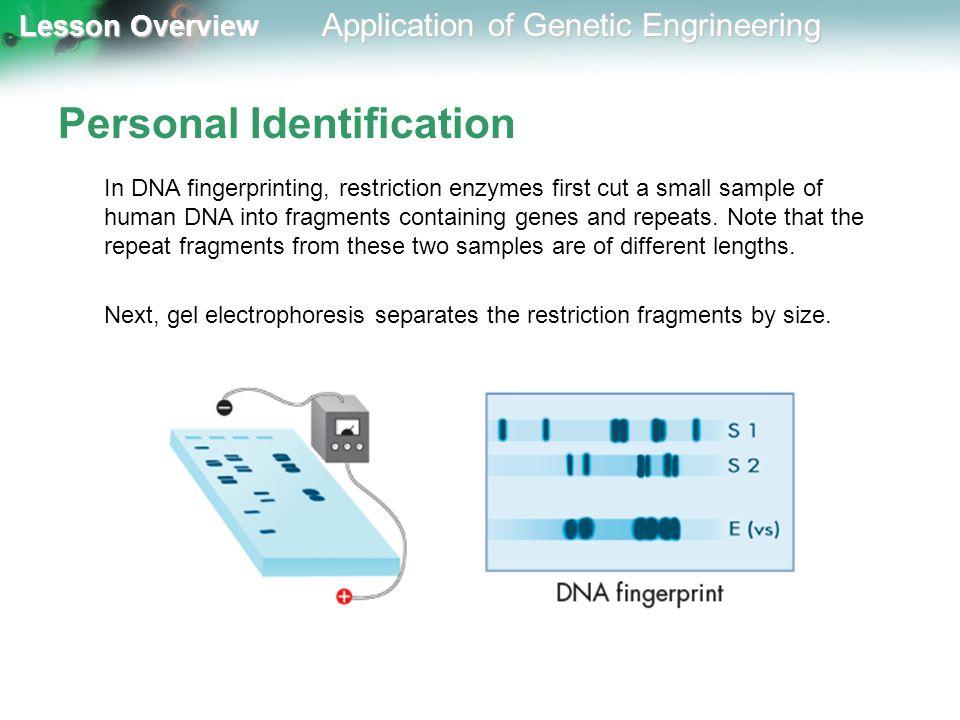 Personal Identification