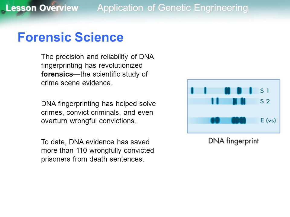 Forensic Science The precision and reliability of DNA fingerprinting has revolutionized forensics—the scientific study of crime scene evidence.