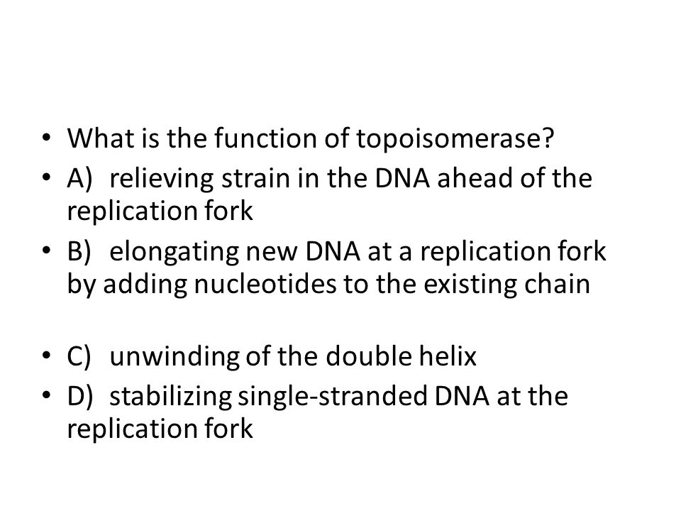 What is the function of topoisomerase