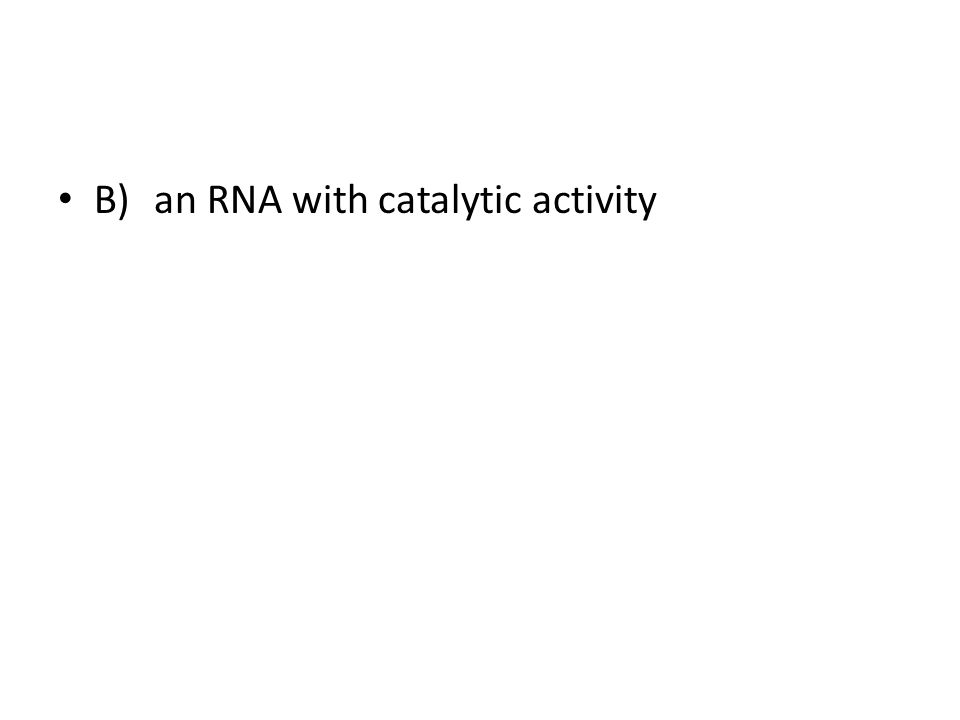 B) an RNA with catalytic activity