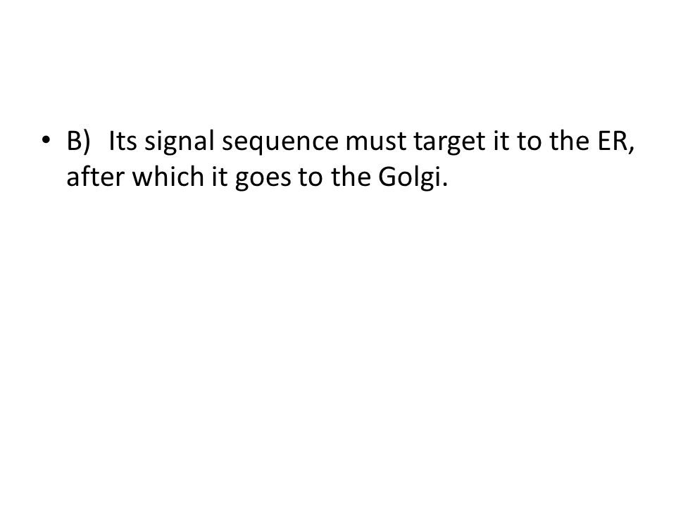 B) Its signal sequence must target it to the ER, after which it goes to the Golgi.