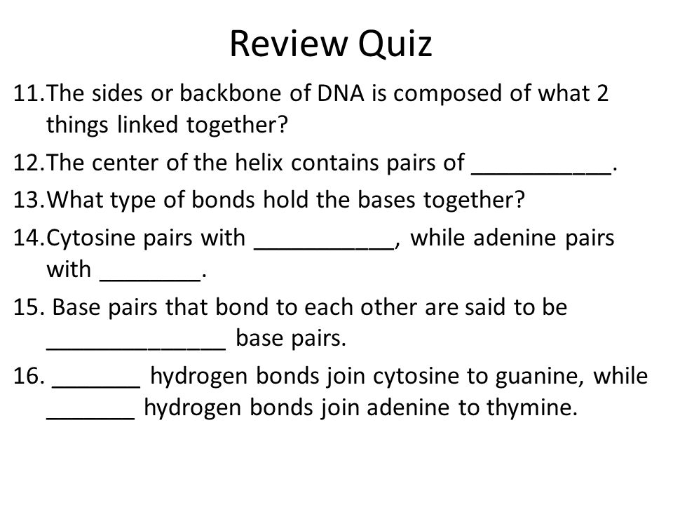 Review Quiz The sides or backbone of DNA is composed of what 2 things linked together The center of the helix contains pairs of ___________.