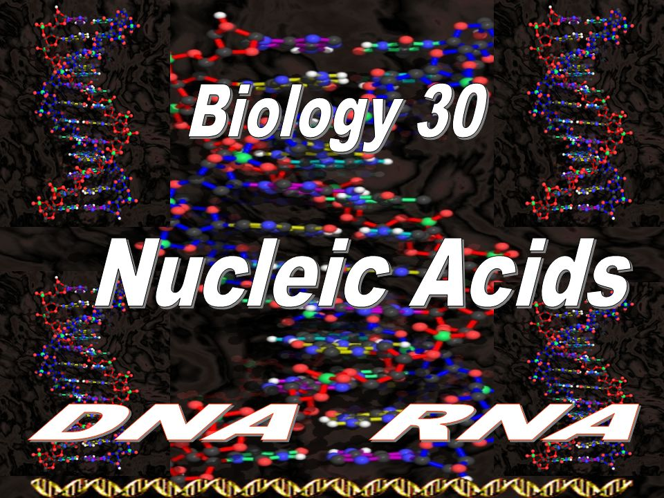Biology 30 Nucleic Acids DNA RNA