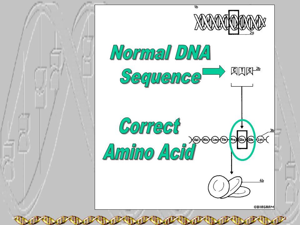Normal DNA Sequence Correct Amino Acid