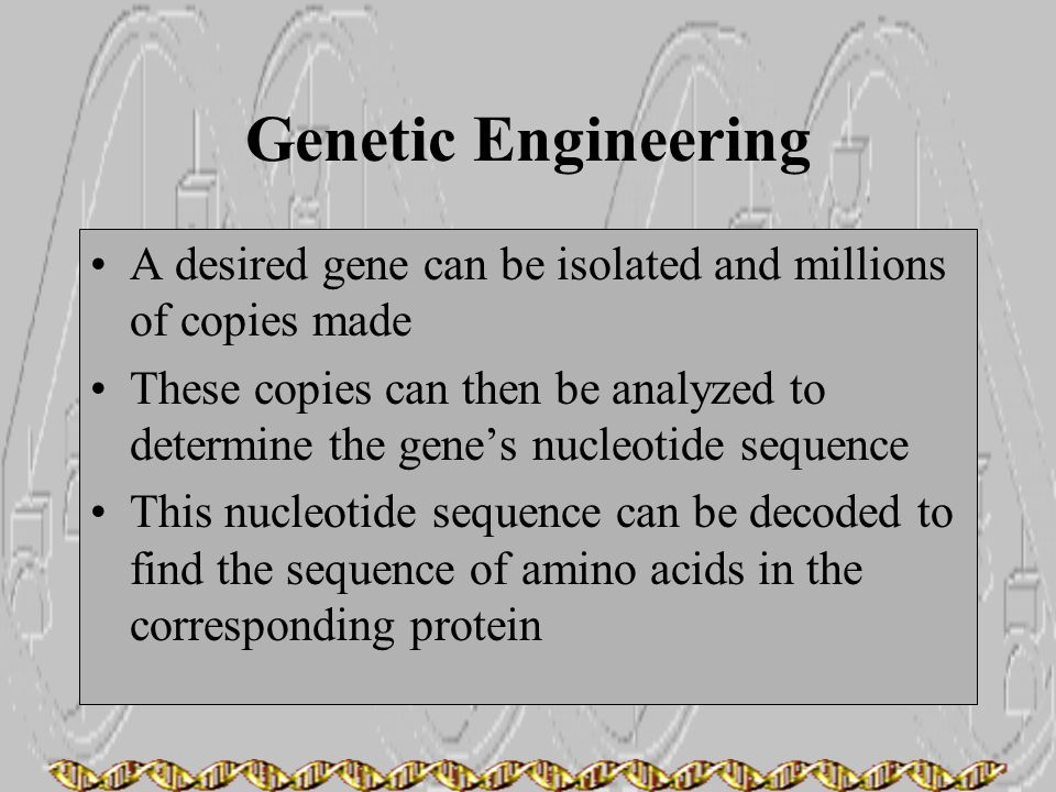 Genetic Engineering A desired gene can be isolated and millions of copies made.