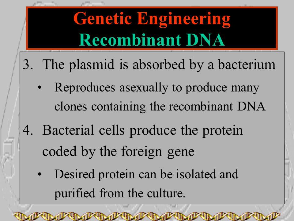 Genetic Engineering Recombinant DNA
