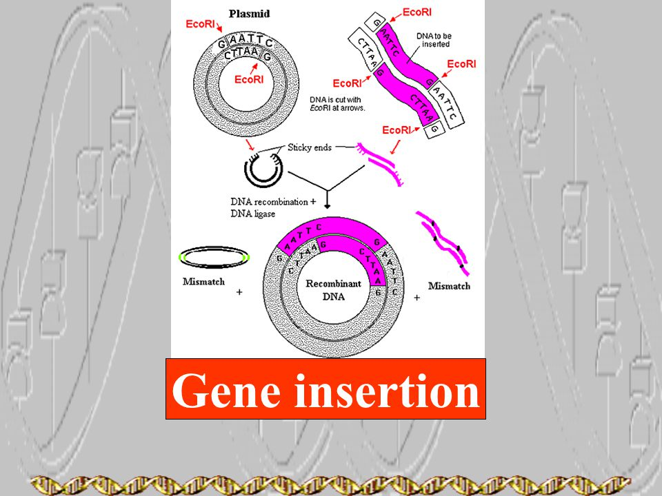 Gene insertion