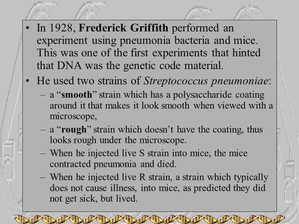 He used two strains of Streptococcus pneumoniae: