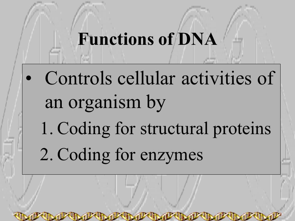 Controls cellular activities of an organism by