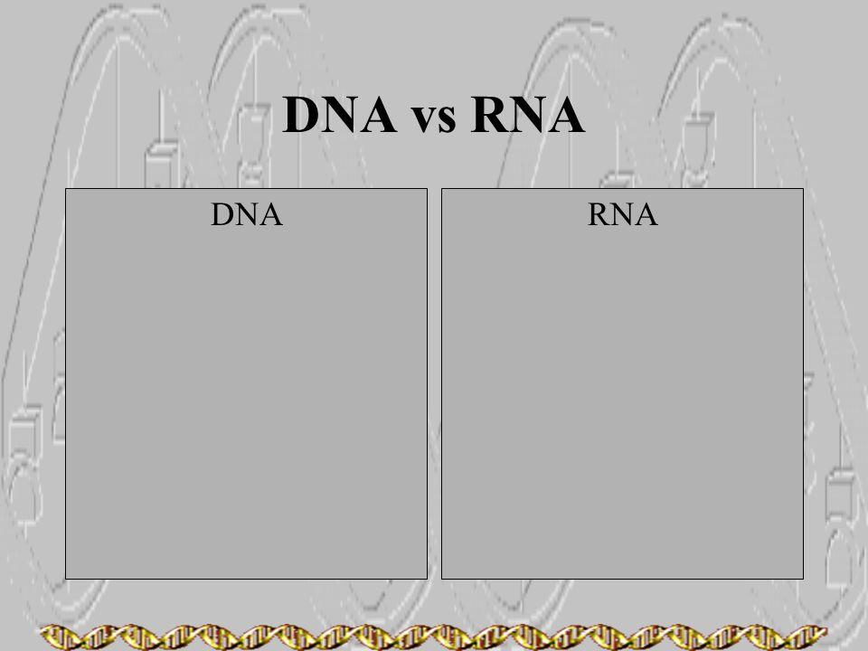 DNA vs RNA DNA RNA